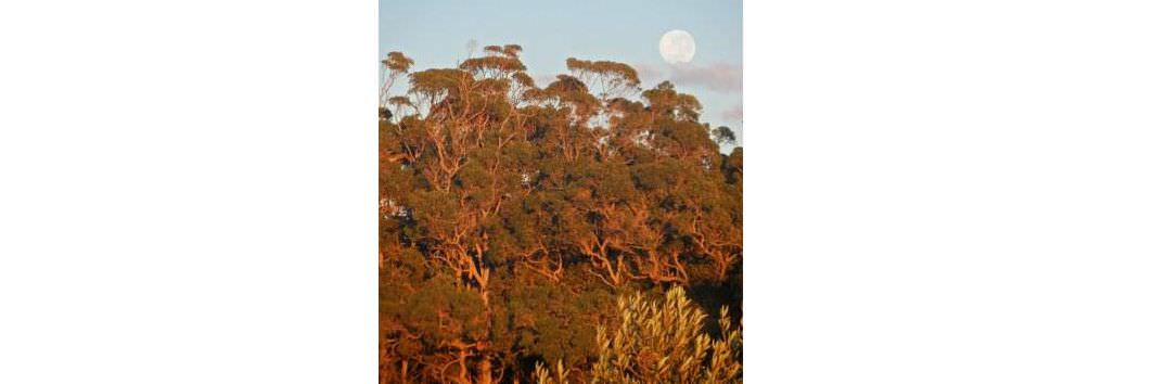 Tennessee Hill Chalets Moon over Karri Trees